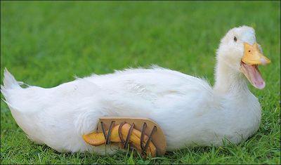 Shoesduck