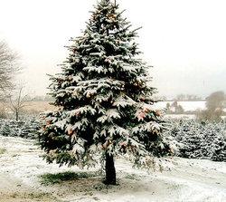 Christmastreepicthing